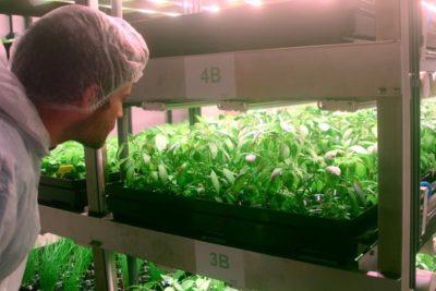 Jungle lève 42M€ pour déployer le modèle des fermes verticales en Europe